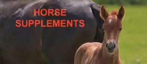 Natural Horse Joint and Nutrition Supplements
