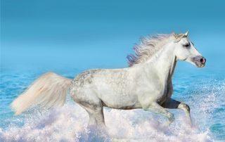 Marine calcium for horses with ringbone