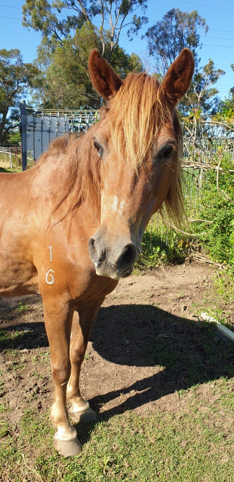 Wonder Joint saves horse life